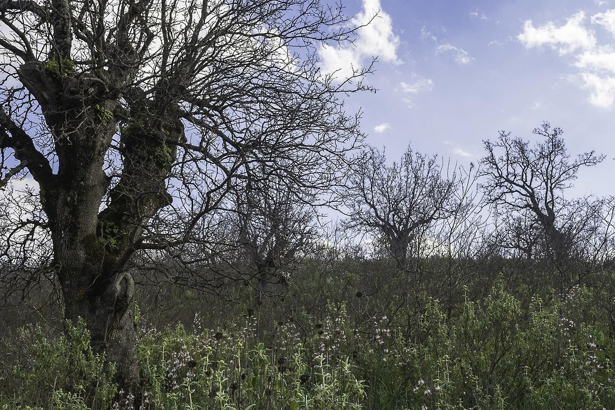Xeromero Oak Woodland